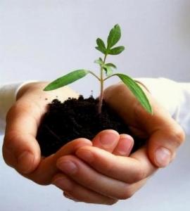 Rinvasare-una-pianta_l